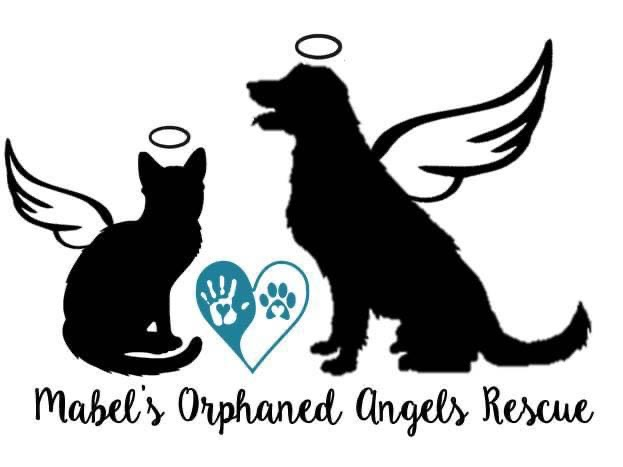 Mabel's Orphaned Angels Rescue