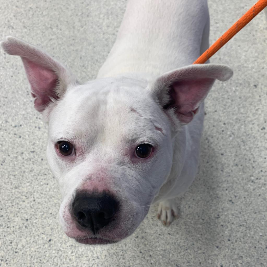 Adopt A Dog | Jacksonville Humane Society