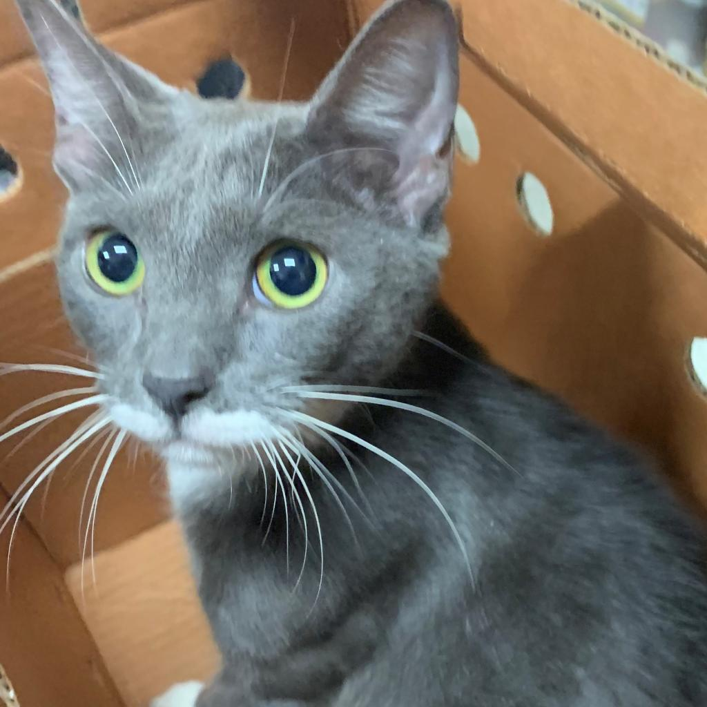 Adopt A Cat or Kitten   Jacksonville Humane Society