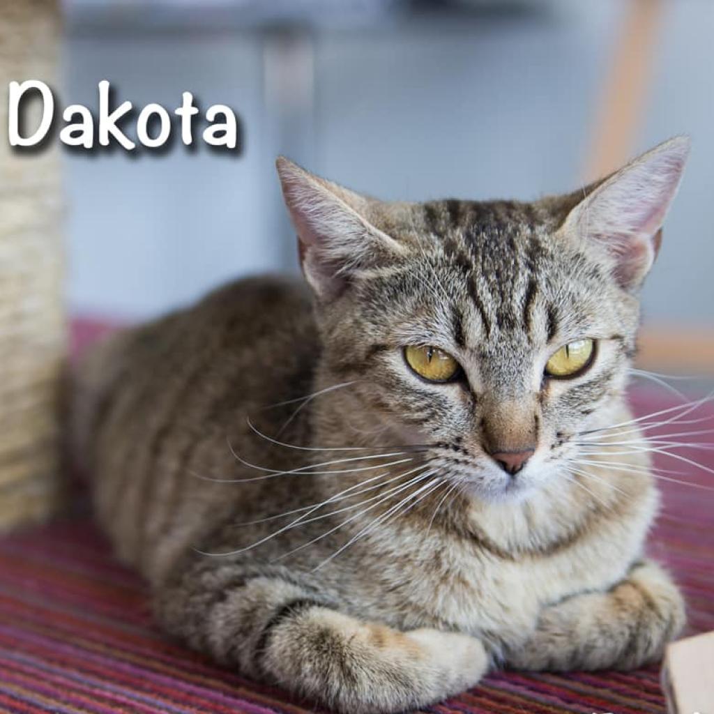 Dakota picture #3