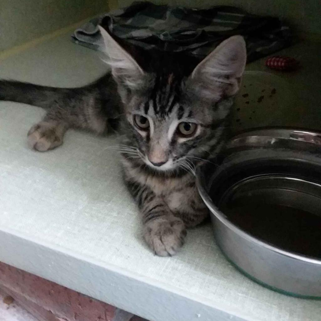 Adelina: Female 3 Domestic Medium Hair