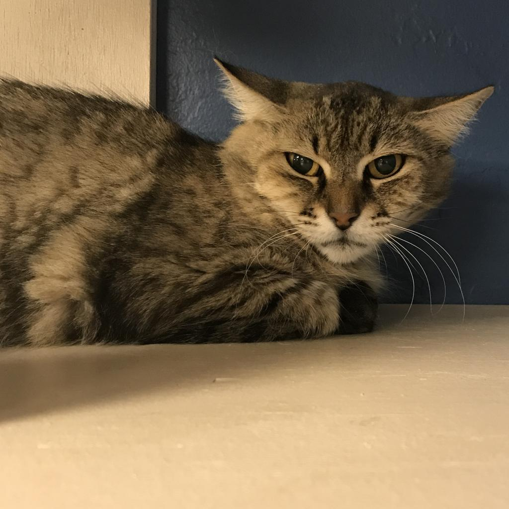 Autumn: Female 45 Domestic Medium Hair