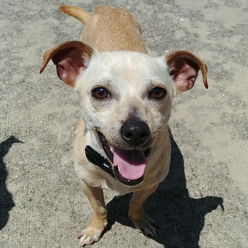 Adoptable Dogs | Dallas Pets Alive!
