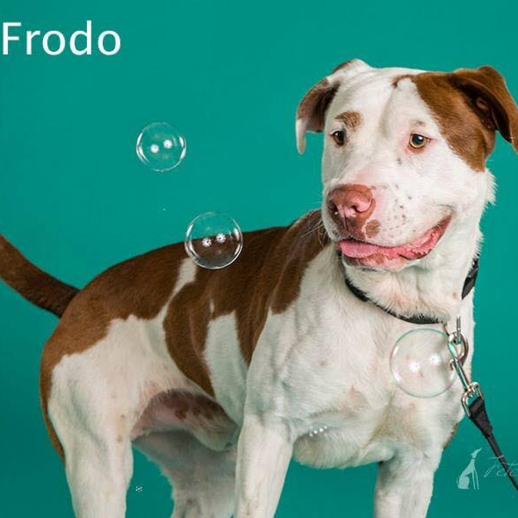 Photo of Frodo