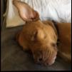 https://www.shelterluv.com/sites/default/files/animal_pics/464/2017/05/29/22/20170529221621_0.png