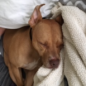 https://www.shelterluv.com/sites/default/files/animal_pics/464/2017/05/31/08/20170531081911_0.png