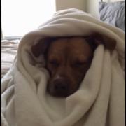 https://www.shelterluv.com/sites/default/files/animal_pics/464/2017/05/31/08/20170531082051.png