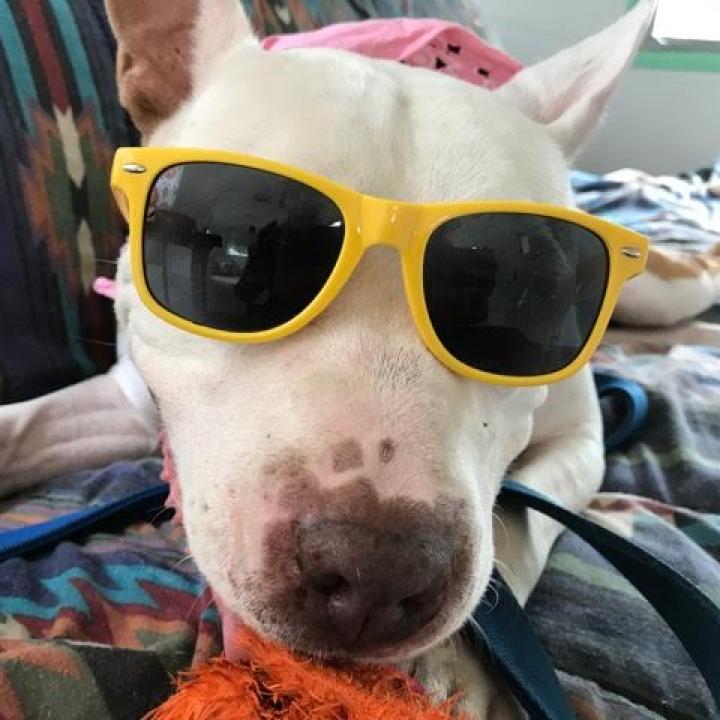 https://www.shelterluv.com/sites/default/files/animal_pics/464/2017/06/14/07/20170614074603.png