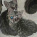 https://www.shelterluv.com/sites/default/files/animal_pics/464/2017/07/24/12/20170724121654.png