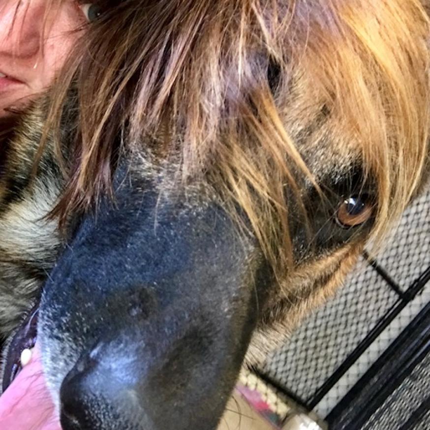 https://www.shelterluv.com/sites/default/files/animal_pics/464/2017/08/21/13/20170821131706.png