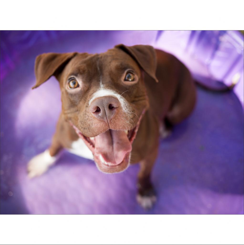 https://www.shelterluv.com/sites/default/files/animal_pics/464/2017/08/21/23/20170821231937.png