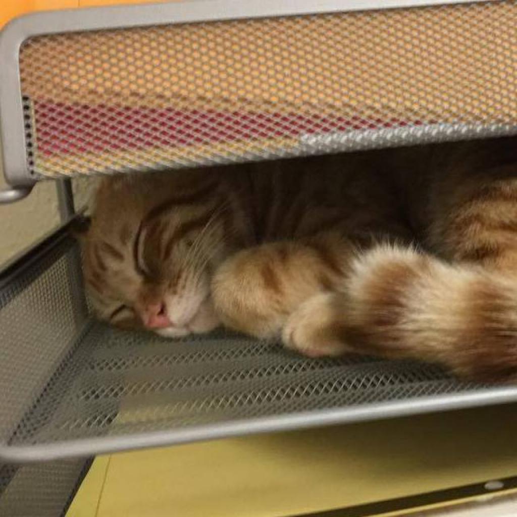 https://www.shelterluv.com/sites/default/files/animal_pics/464/2017/10/31/19/20171031191310.png