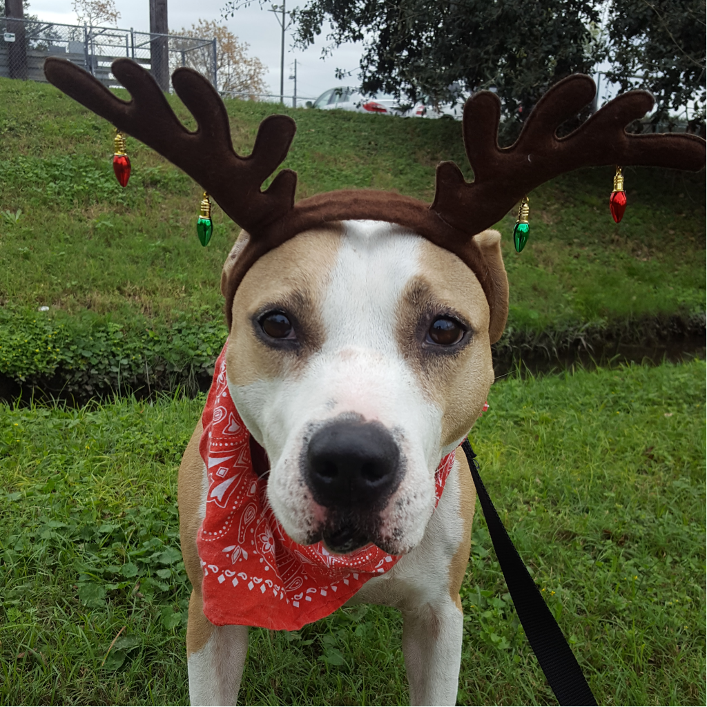 https://www.shelterluv.com/sites/default/files/animal_pics/464/2017/11/12/11/20171112111546_0.png
