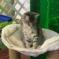 https://www.shelterluv.com/sites/default/files/animal_pics/464/2017/11/27/15/20171127155949.png