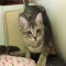 https://www.shelterluv.com/sites/default/files/animal_pics/464/2017/11/27/16/20171127160038.png