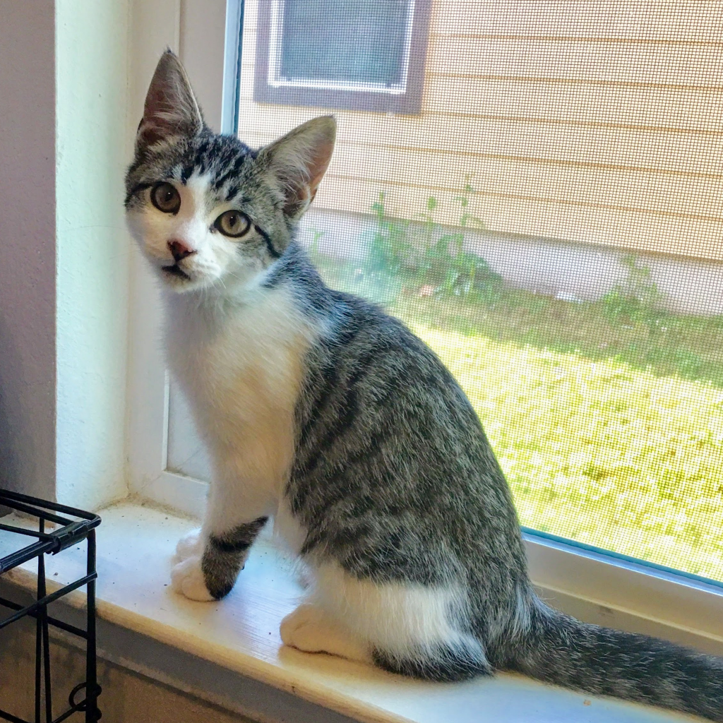 Photo of Nausicaa