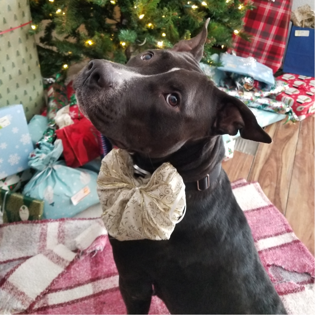https://www.shelterluv.com/sites/default/files/animal_pics/464/2017/12/27/15/20171227154748_0.png