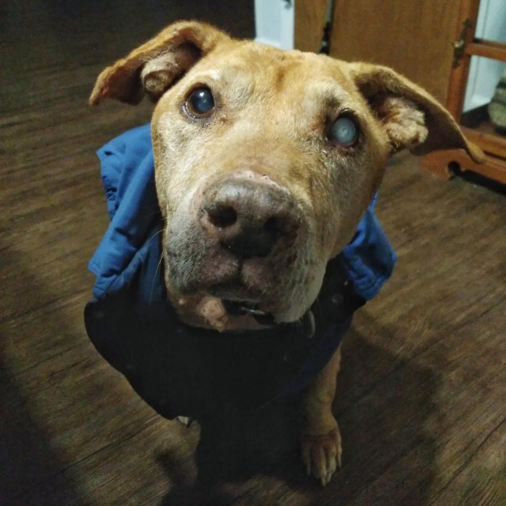 https://www.shelterluv.com/sites/default/files/animal_pics/464/2018/01/05/13/20180105130344.png
