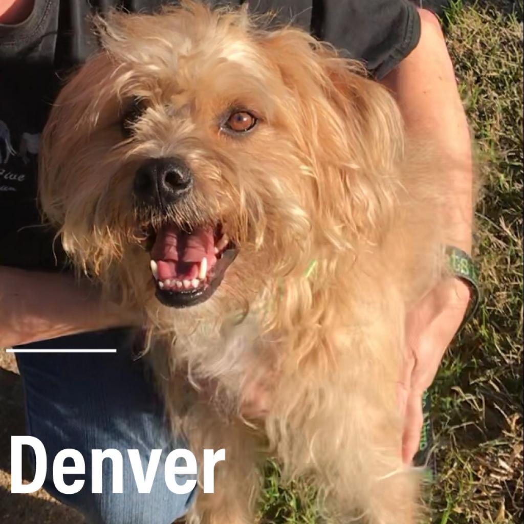 Photo of Denver