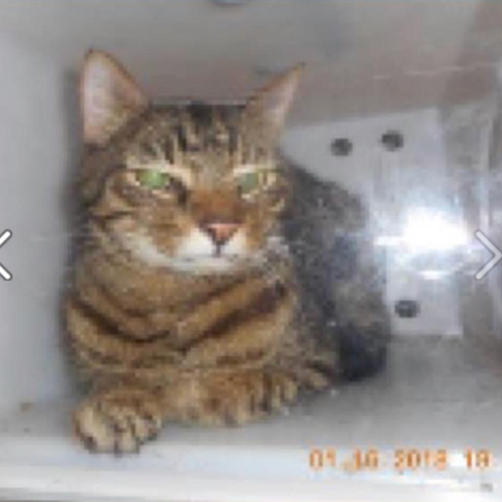 https://www.shelterluv.com/sites/default/files/animal_pics/464/2018/01/19/13/20180119131312.png