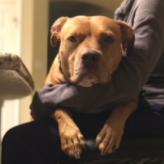 https://www.shelterluv.com/sites/default/files/animal_pics/464/2018/01/31/18/20180131184808_0.png