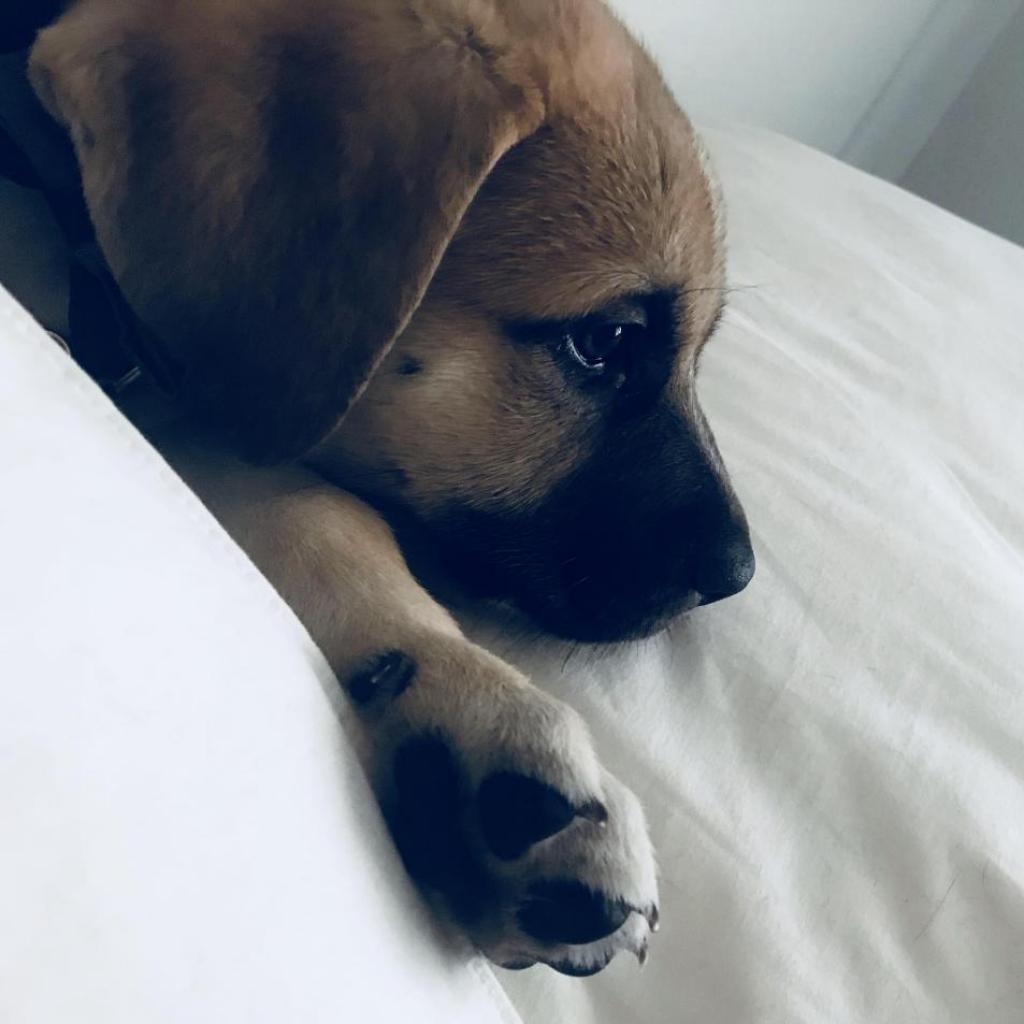 https://www.shelterluv.com/sites/default/files/animal_pics/464/2018/03/07/14/20180307140926_0.png