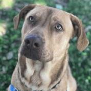 Photo of Brewster