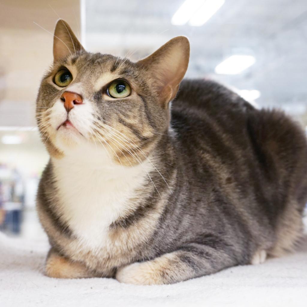 Surrender Cat To Animal Shelter