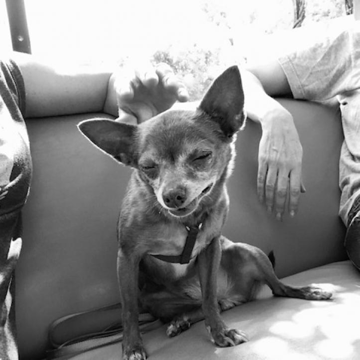 https://www.shelterluv.com/sites/default/files/animal_pics/464/2018/05/16/16/20180516164458.png