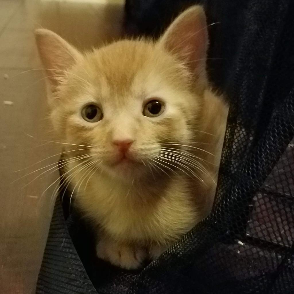 Photo of Ernie 8