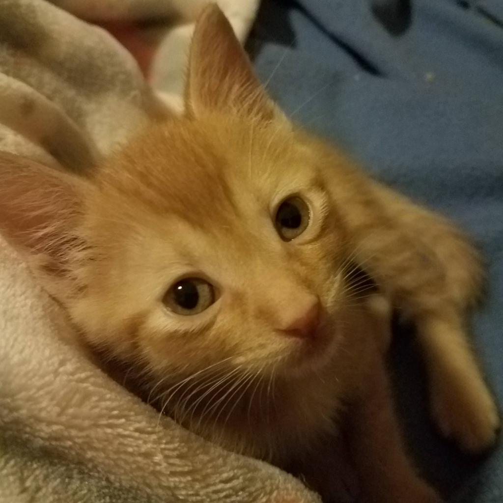 Photo of Effie 8