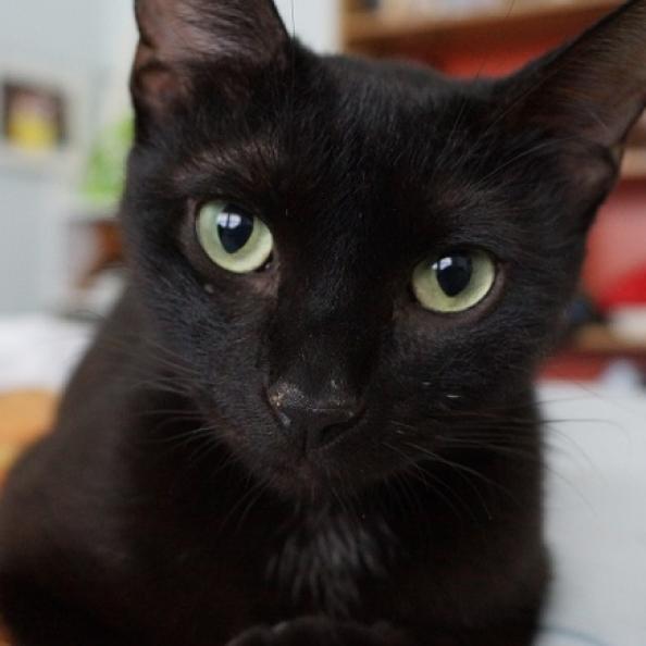 Photo of Lasso