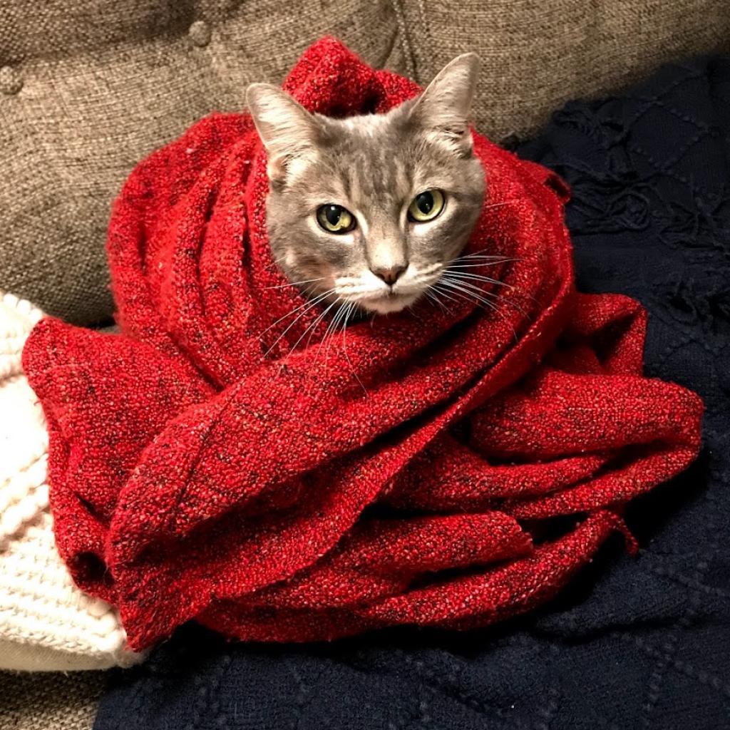 https://www.shelterluv.com/sites/default/files/animal_pics/464/2018/06/15/06/20180615061335.png