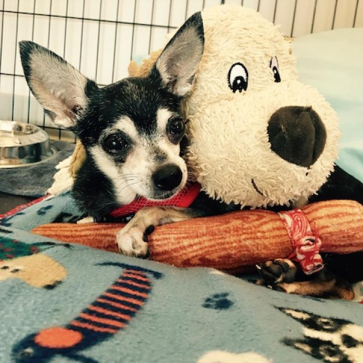 Photo of Chula