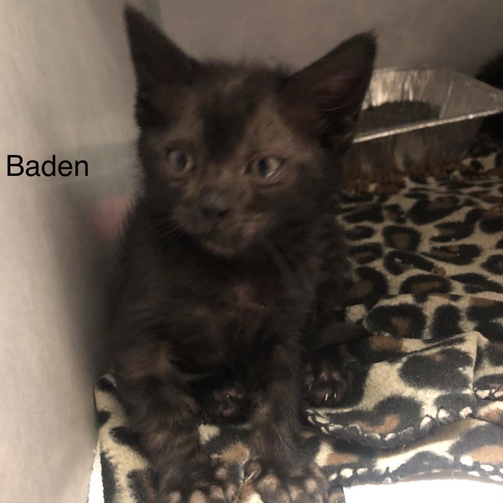 Photo of Baden 16