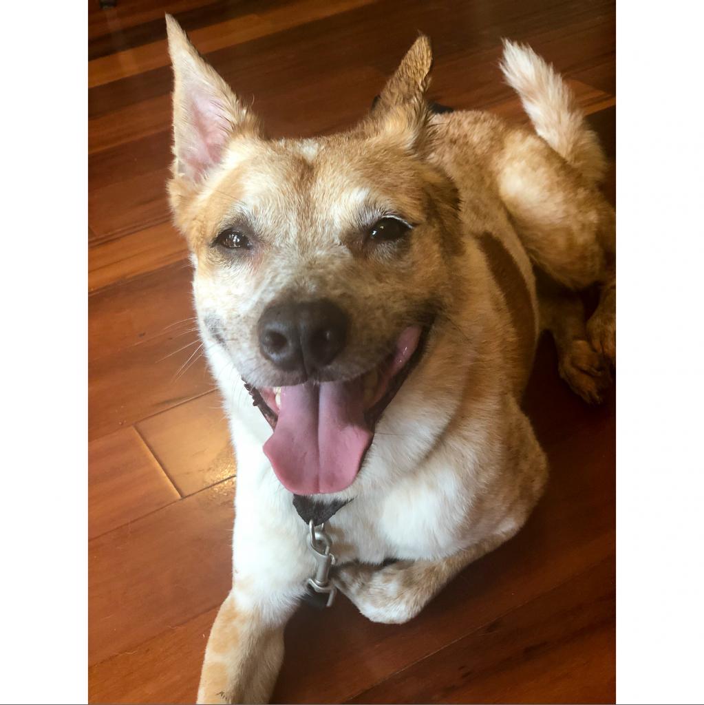 https://www.shelterluv.com/sites/default/files/animal_pics/464/2018/06/25/17/20180625174647.png