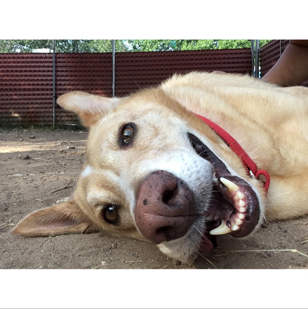 https://www.shelterluv.com/sites/default/files/animal_pics/464/2018/07/05/17/20180705173134.png