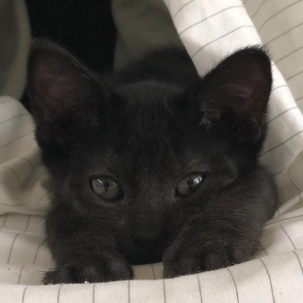 Photo of Sebastian 8