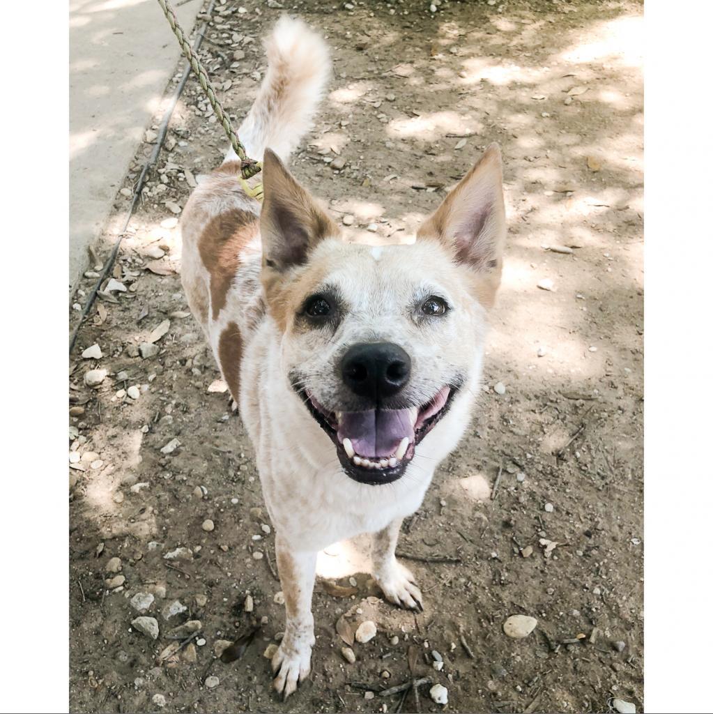 https://www.shelterluv.com/sites/default/files/animal_pics/464/2018/07/08/20/20180708203848.png