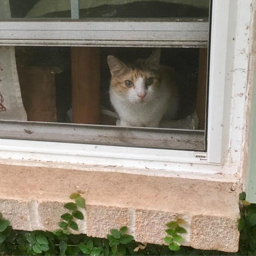 https://www.shelterluv.com/sites/default/files/animal_pics/464/2018/07/09/16/20180709160553.png