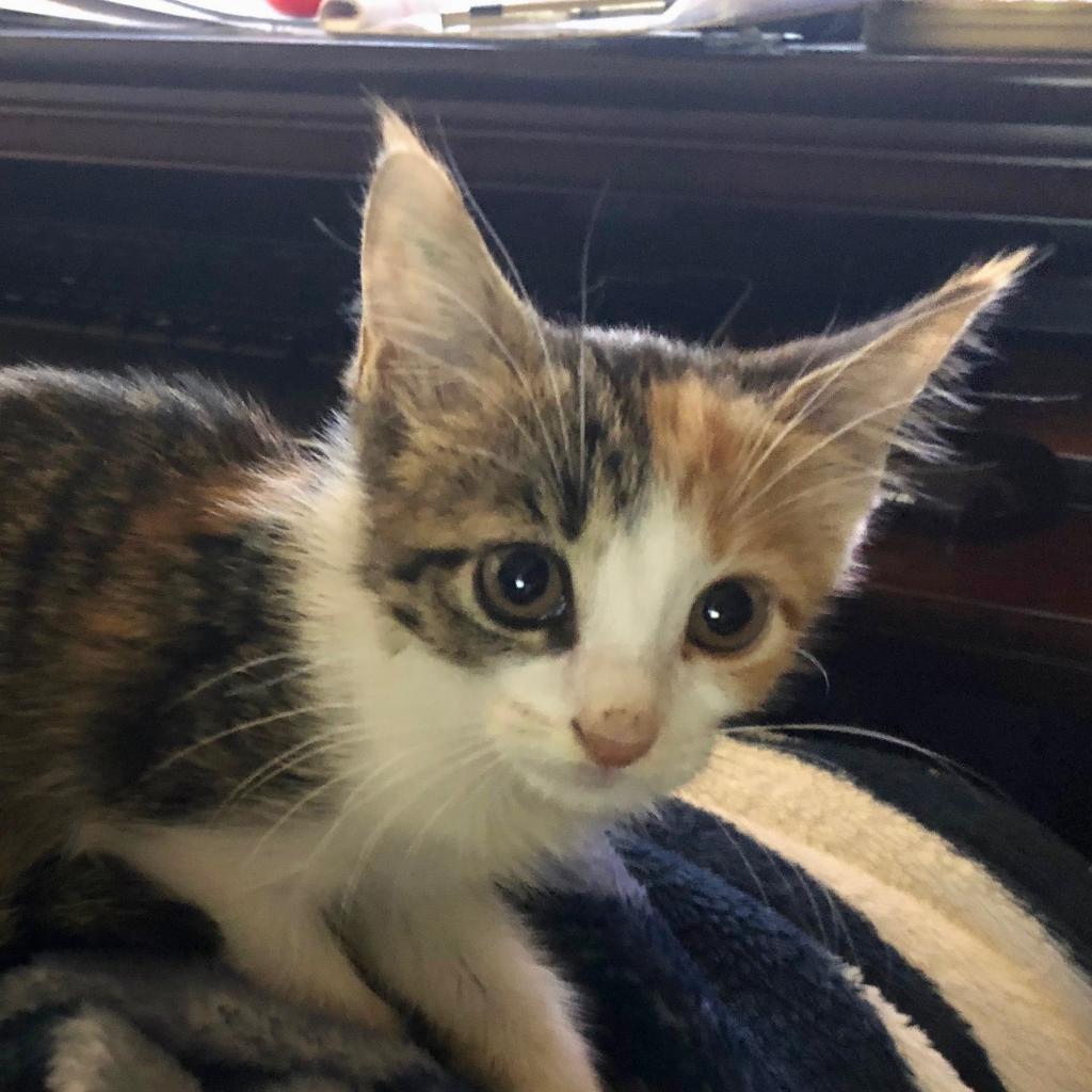 Photo of Nellie 17