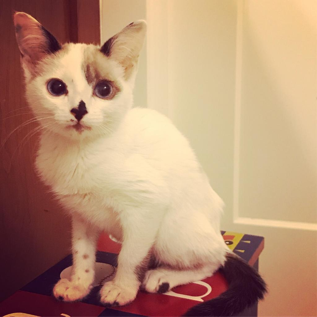 Photo of Pea