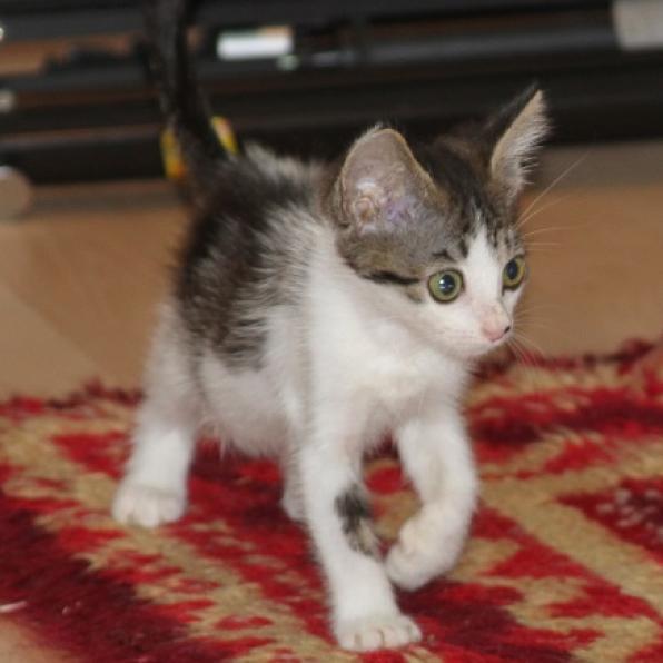 Photo of Jasmine 16