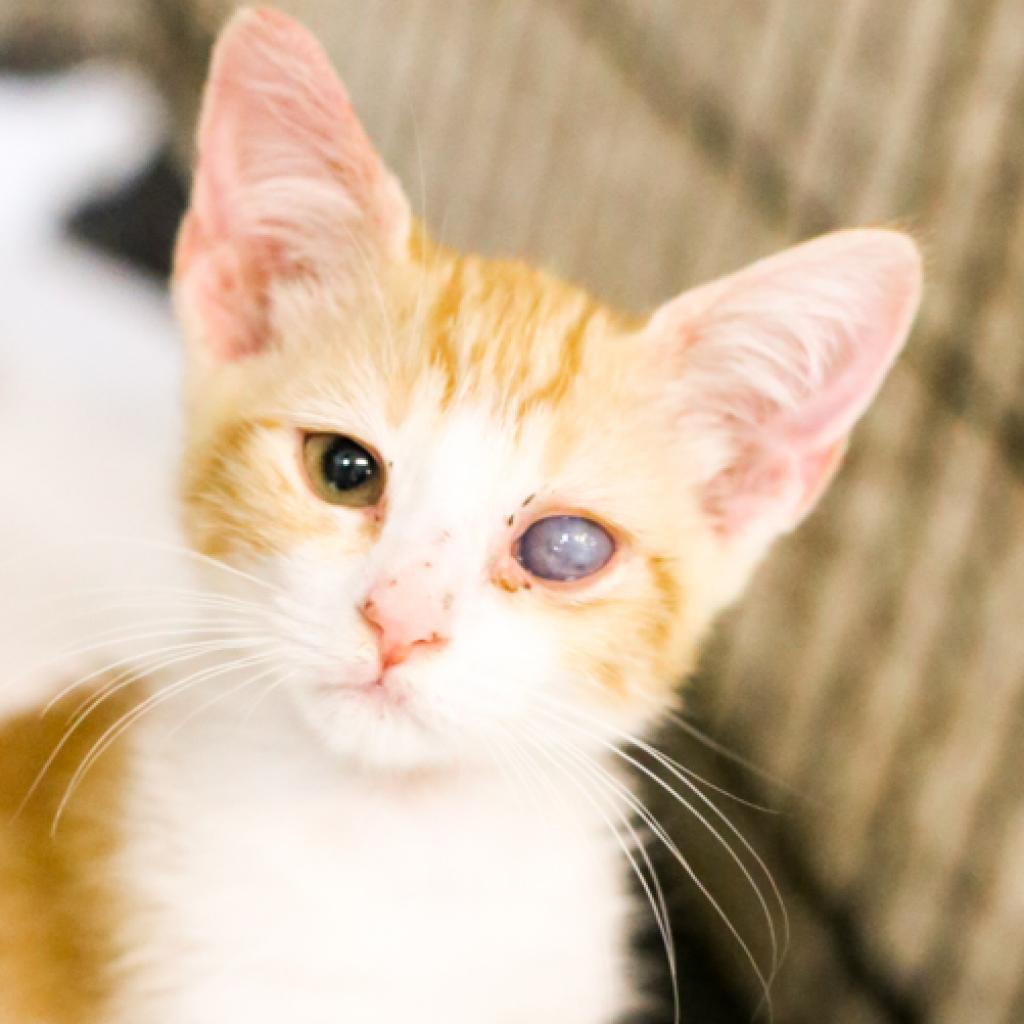 Photo of Kitty Sparkle Sunshine