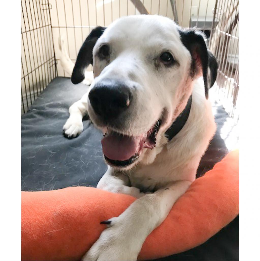 https://www.shelterluv.com/sites/default/files/animal_pics/464/2018/07/22/15/20180722155143.png