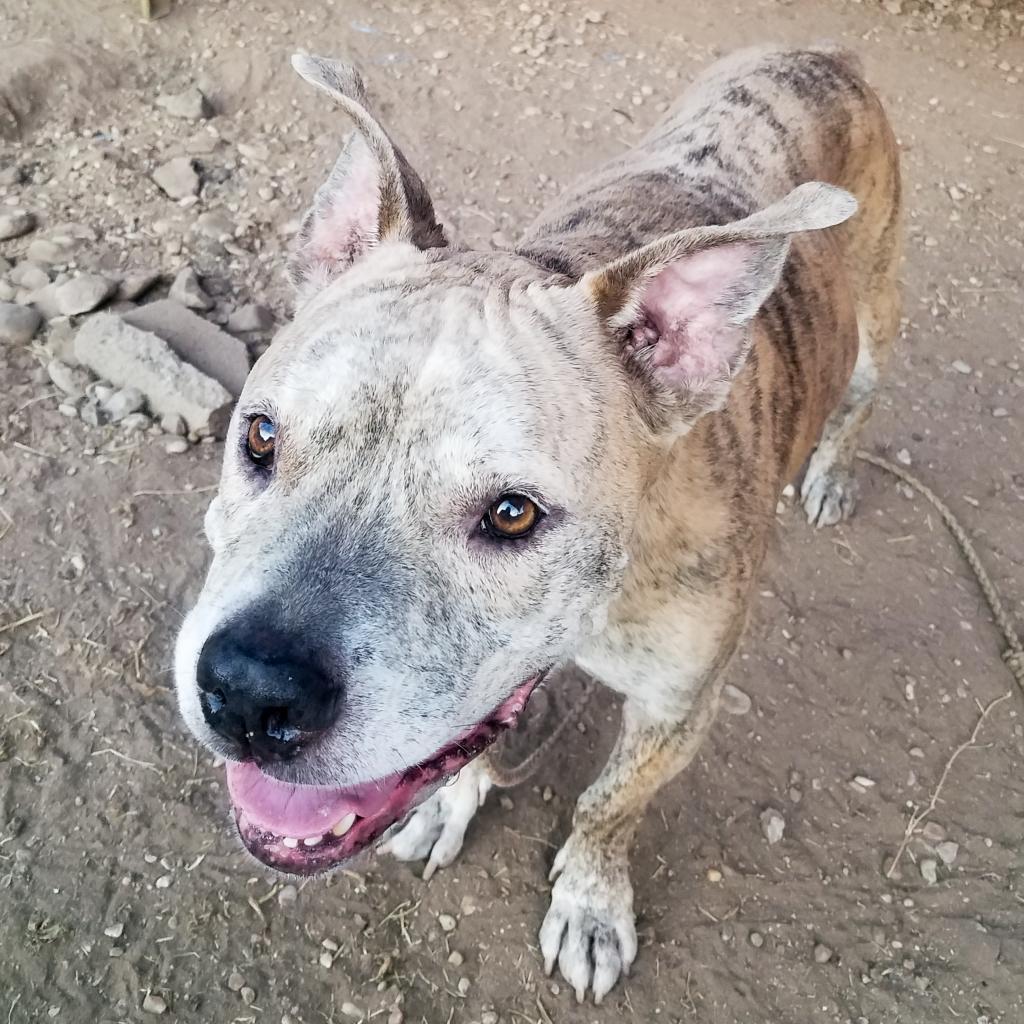 https://www.shelterluv.com/sites/default/files/animal_pics/464/2018/08/09/22/20180809225935.png