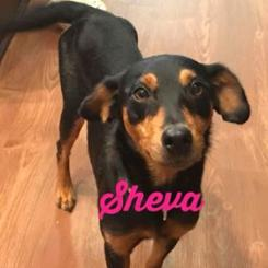 Photo of Sheva