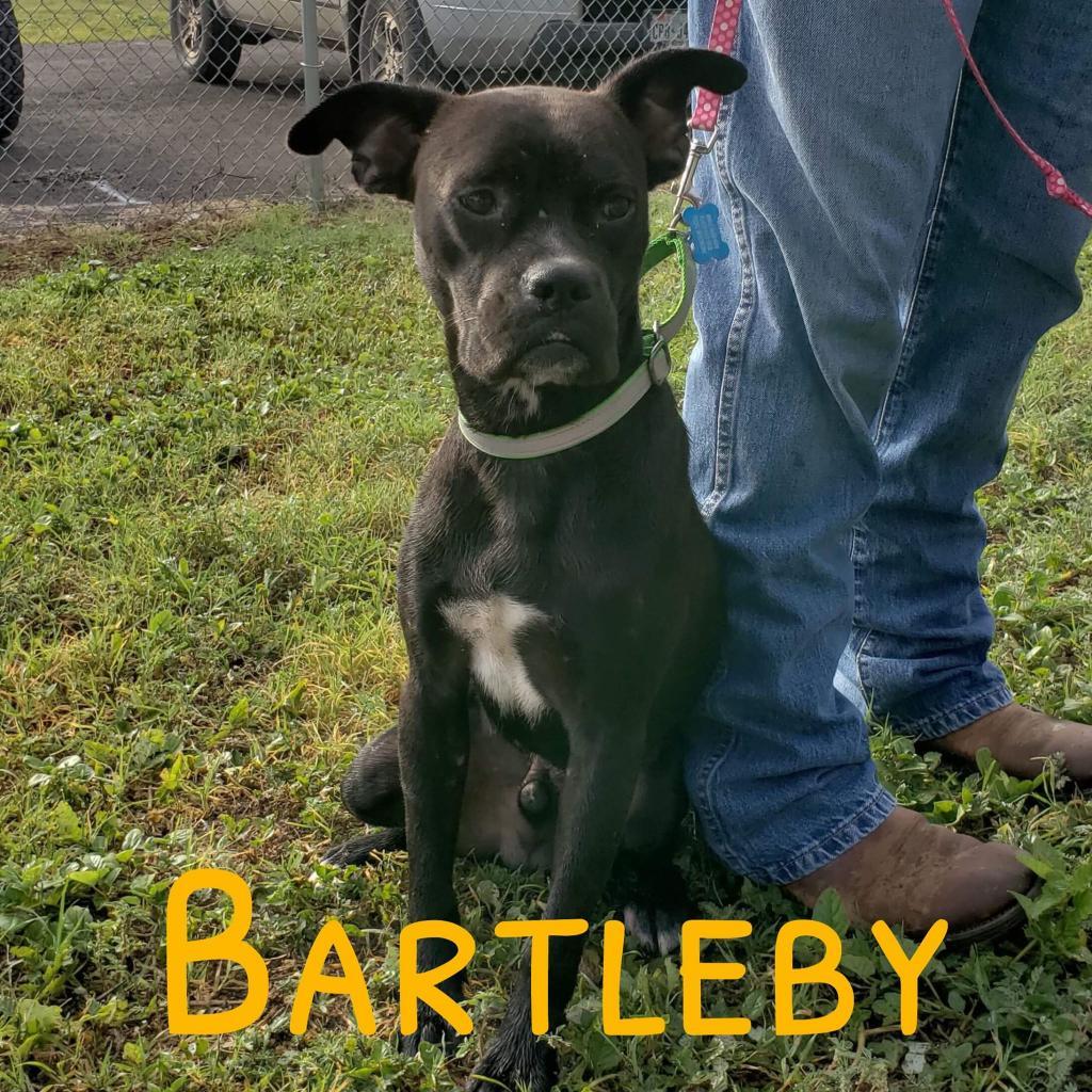 Photo of Bartleby