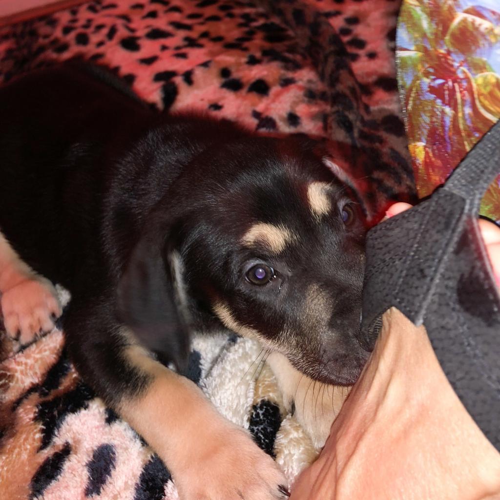 Photo of Baby Kikorangi