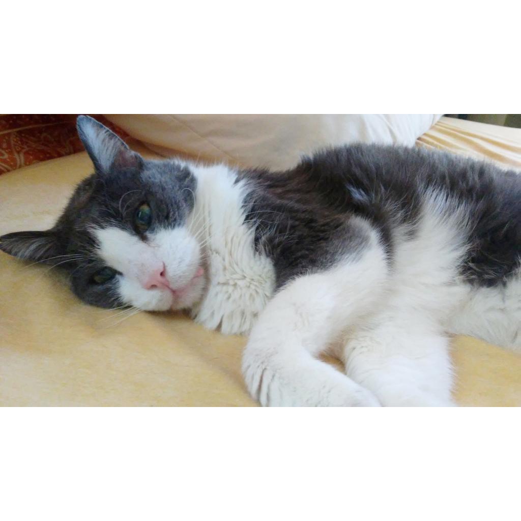 https://www.shelterluv.com/sites/default/files/animal_pics/464/2018/08/31/15/20180831151855.png